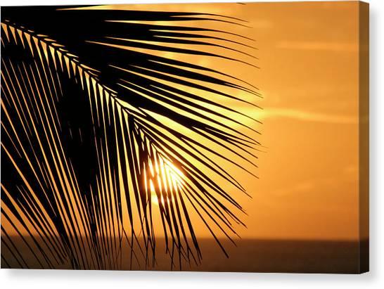 Palm Sunset Canvas Print