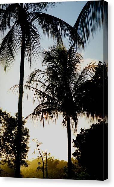 Palm Tree Canvas Print by Amarildo Correa