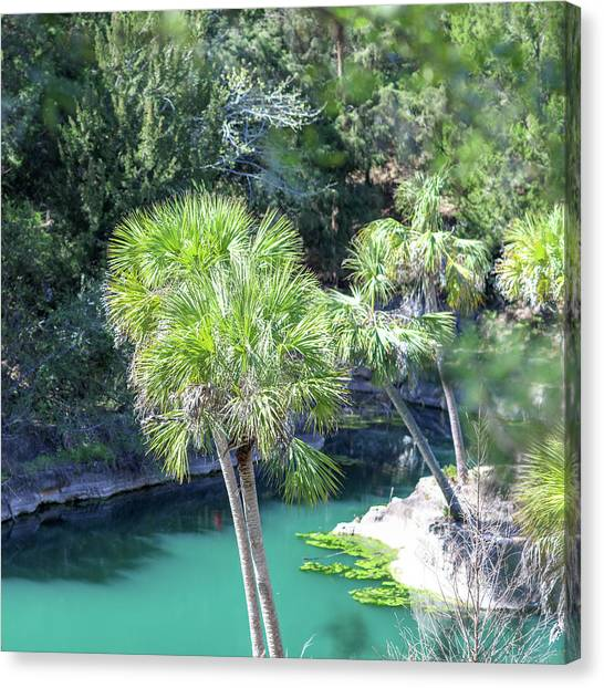 Canvas Print featuring the photograph Palm Tree Blue Pond by Raphael Lopez