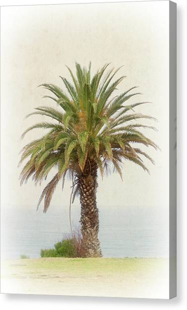 Palm Tree In Coastal California In A Retro Style Canvas Print