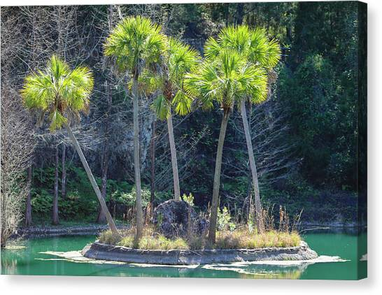Canvas Print featuring the photograph Palm Tree Island by Raphael Lopez