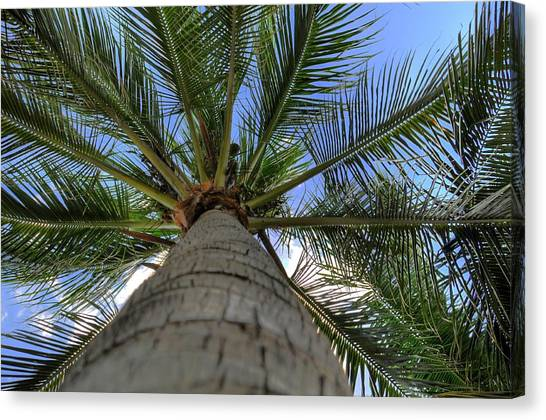 Palm Tree Canvas Print by Kelly Wade