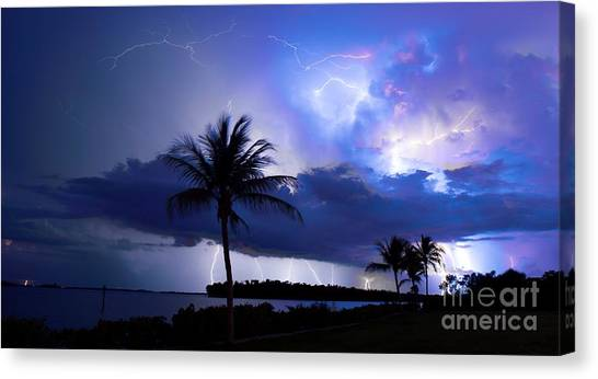 Palm Tree Nights Canvas Print