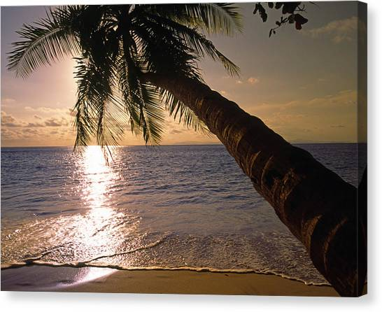 Palm Tree Over The Beach In Costa Rica Canvas Print
