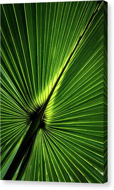 Palm Tree With Back-light Canvas Print