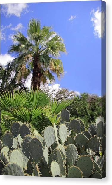 Palm Trees And Cactus Canvas Print