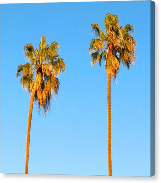 Beach Canvas Print - #palm #trees At Sunset. #california by Shari Warren