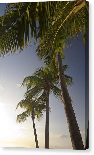 Palm Trees Sunsets Canvas Print - Palm Trees At Sunset by Sven Brogren
