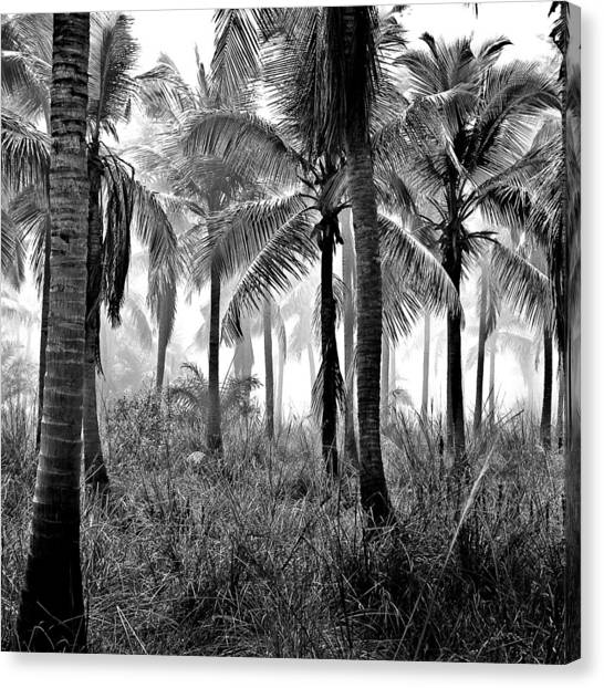Palm Trees - Black And White Canvas Print
