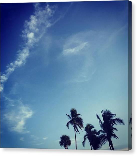 Miami Canvas Print - Palm Trees #juansilvaphotos by Juan Silva