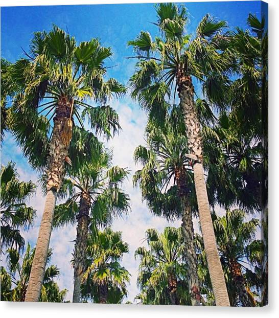 Beach Canvas Print - #palm #trees Just Make Me #smile by Shari Warren