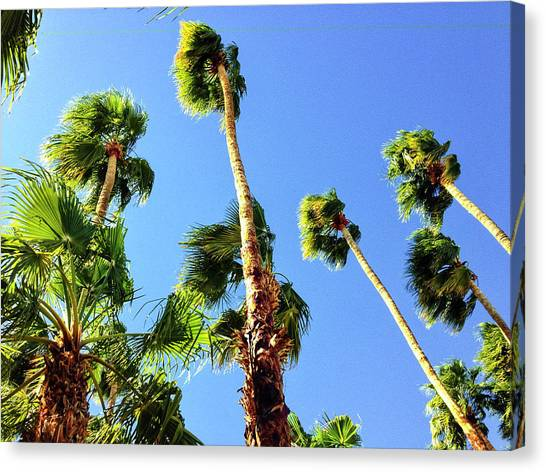 Palm Trees Looking Up Canvas Print