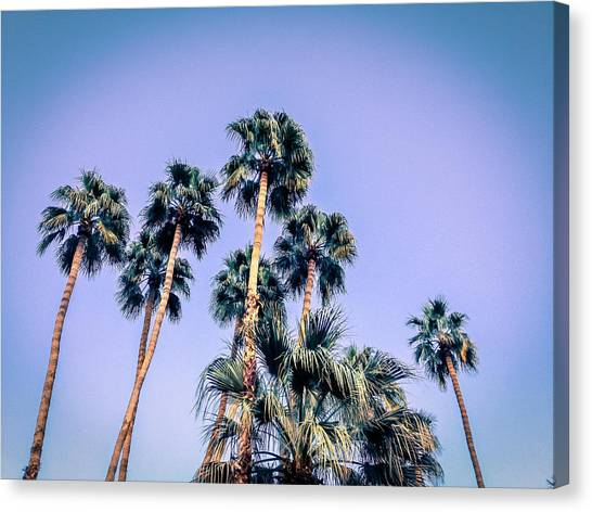 Palm Trees Palm Springs Summer Canvas Print