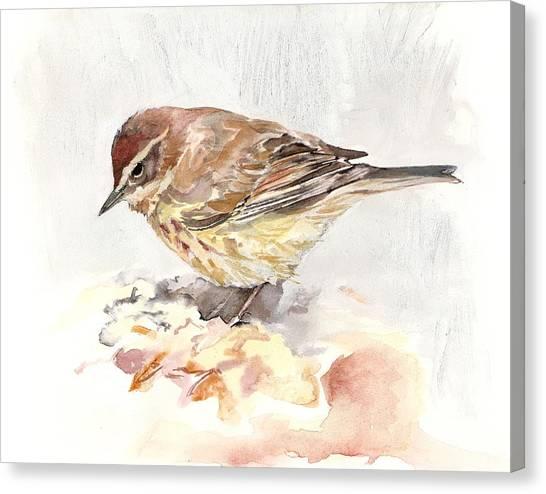Palm Warbler Canvas Print