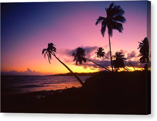 Palm Trees Sunsets Canvas Print - Palmas Del Mar Sunset Puerto Rico by George Oze