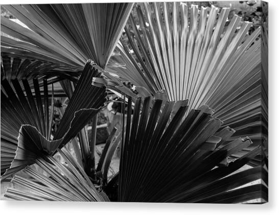 Palmetto In Black And White Canvas Print