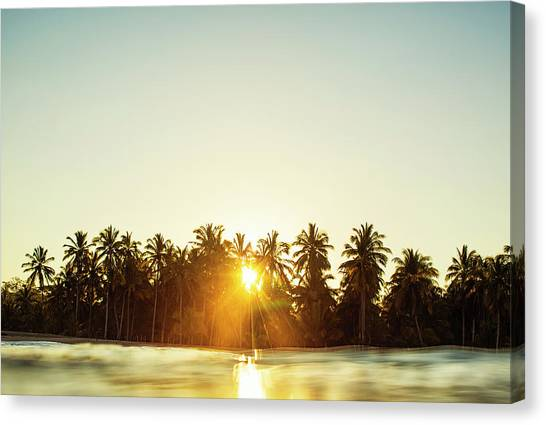 Palms And Rays Canvas Print