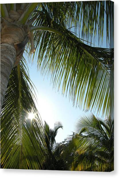 Palms Canvas Print by Audrey Venute