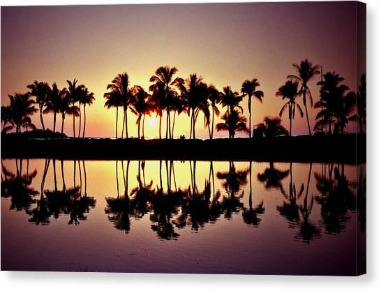 Palms In Silhouette Canvas Print by Michael  Cryer