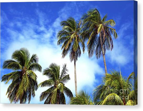 Palms Canvas Print by John Rizzuto