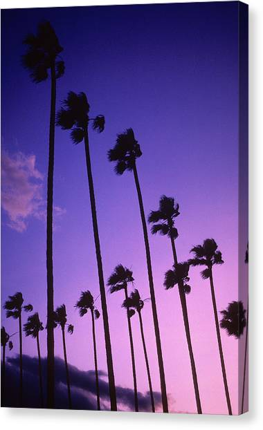 Palm Trees Sunsets Canvas Print - Palms by Steve Williams