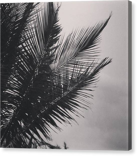 Black And White Canvas Print - Palm Trees  Against A Stormy Sky by Colleen Kammerer