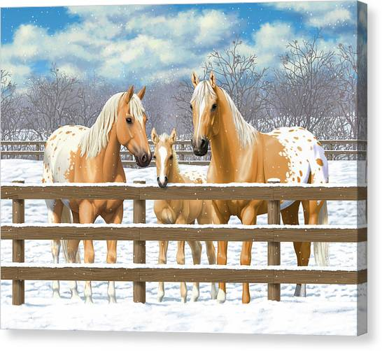 Palomino Appaloosa Horses In Snow Canvas Print by Crista Forest