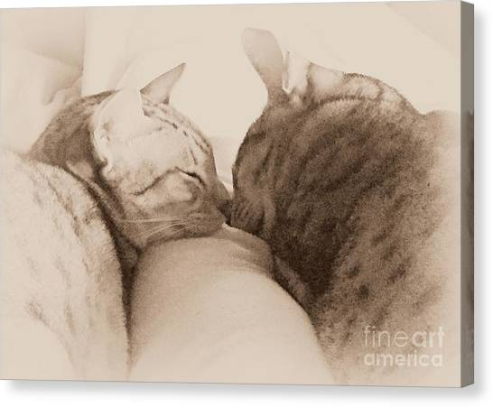 Ocicats Canvas Print - Pals by Jenny Revitz Soper
