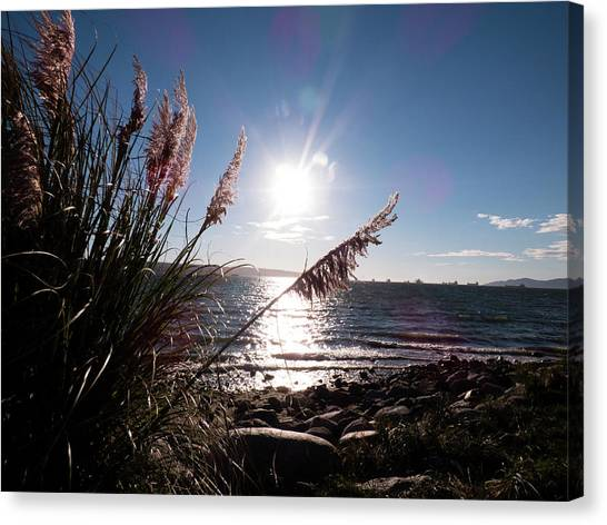 Pampas By The Sea Canvas Print