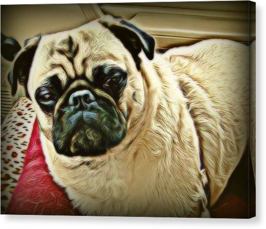 Canvas Print - Pampered Pug by Raven Hannah