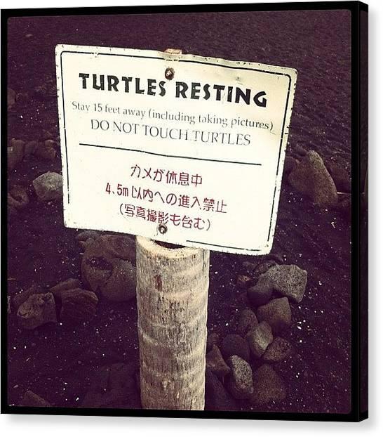 Turtles Canvas Print - Panalu'u Black Sand Beach  by Emily B