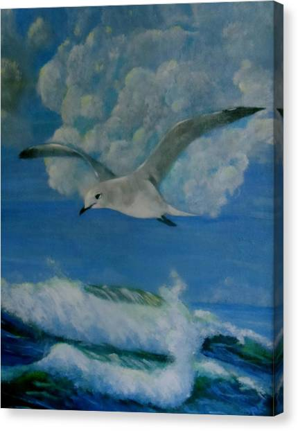 Panama City Seagull Canvas Print