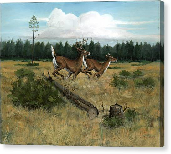 Panhandle Deer Canvas Print by Timothy Tron