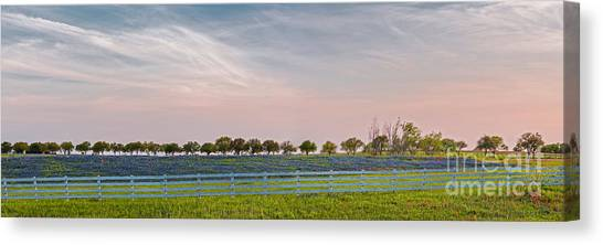 Prairie Sunsets Canvas Print - Panorama Of A Bluebonnet Field In Chappell Hill Washington County - Brenham Texas by Silvio Ligutti