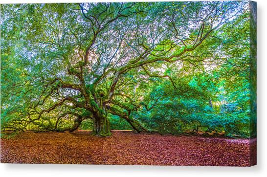 Panoramic Angel Oak Tree Charleston Sc Canvas Print