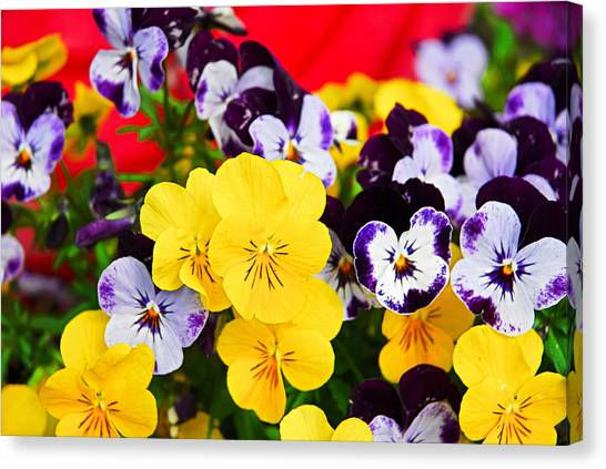 Pansies And Red Cart Canvas Print