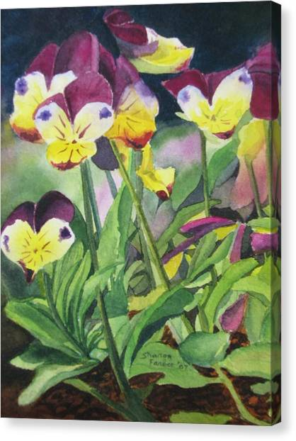 Pansies Canvas Print by Sharon Farber