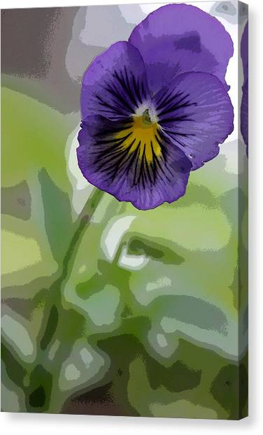 Pansy Canvas Print by David Bearden