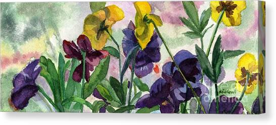 Pansy Field Canvas Print
