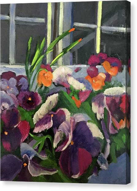Pansy Frenzy Canvas Print