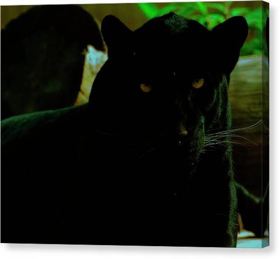 Canvas Print featuring the photograph Panther by Chris Flees