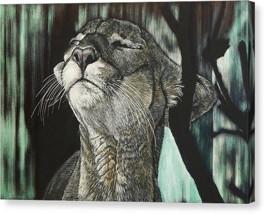 Panther, Cool Canvas Print