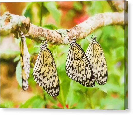 Paper Kite Butterflies Canvas Print