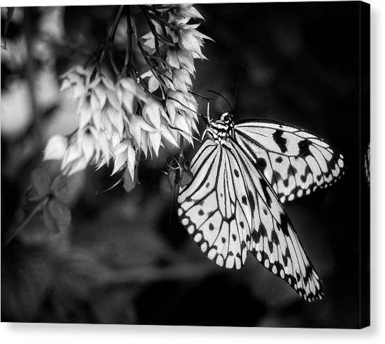 Paper Kite In Black And White Canvas Print