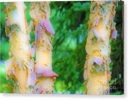 Paper Thin Bark Canvas Print