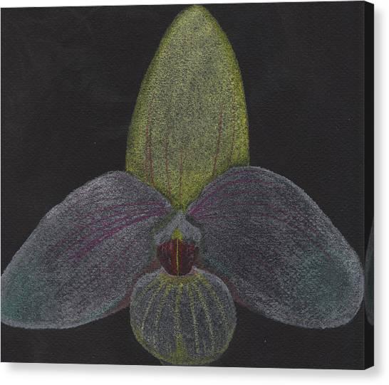 Paphiopedilum Mem. Orchid Canvas Print