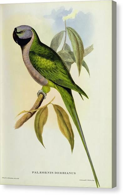 Parakeets Canvas Print - Parakeet by John Gould