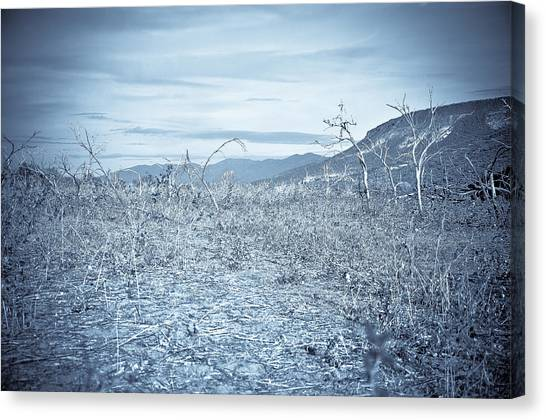 Parched Canvas Print by Keith Sanders
