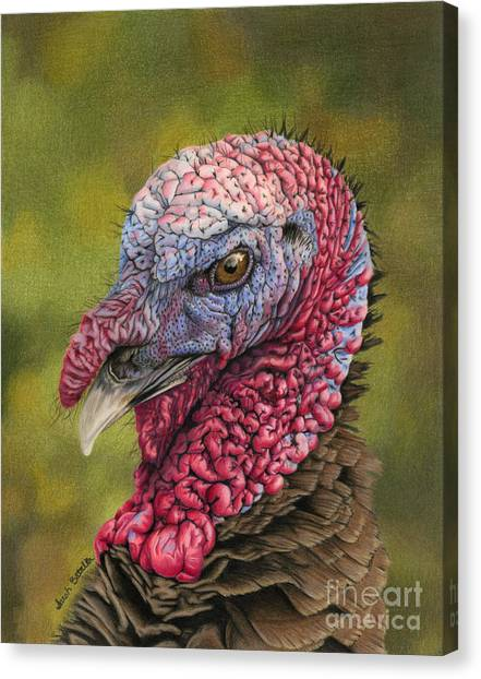 Large Birds Canvas Print - Pardon Me? by Sarah Batalka