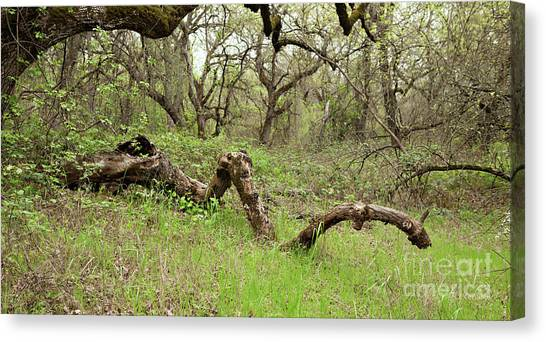 Park Serpent Canvas Print
